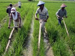 Ekonomi Agribisnis Pertanian
