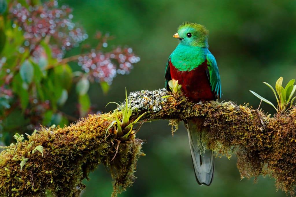 Keanekaragaman hayati hutan